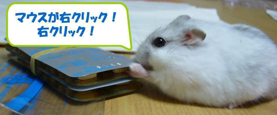 ハムスターういちゃん