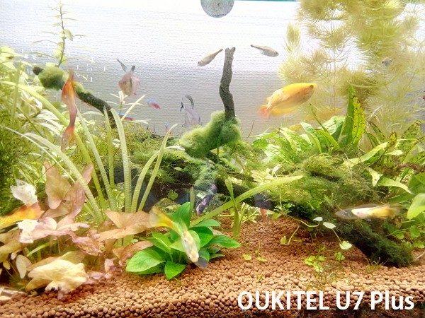 「OUKITEL U7 Plus」のカメラ性能は?