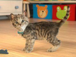 猫好き必携!Appleが「今週のApp」として幼児向けの「小さな子猫 - お気に入りの猫」を無料配信中!
