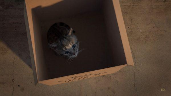 Appleが「今週のApp」として「小さな子猫 - お気に入りの猫」を無料配信中!