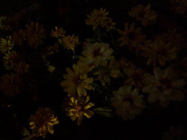 実際にPixel 3 XLの「夜景モード」で撮影した写真はこちら!凄過ぎ!