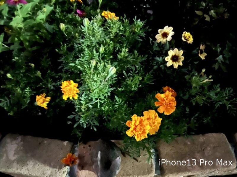 iPhone13 Pro Max:ナイトモード