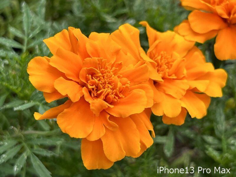iPhone13 Pro Max:カメラ